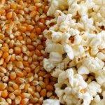 popcorn-and-kernels